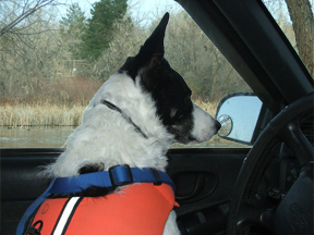 Darby watching the Canada geese from her truck.