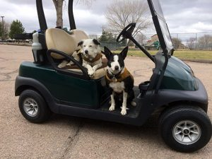 Marley & Wick on a golf cart.